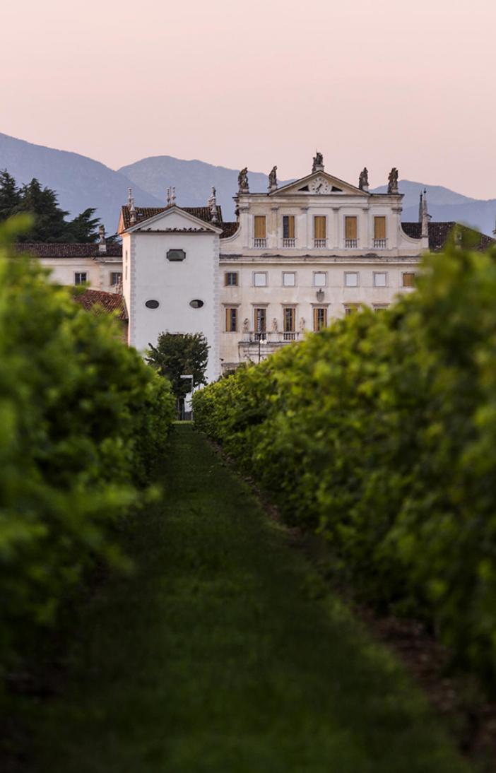 Territorio vigne Vendrame