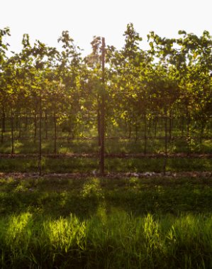 Immagine Friuli Grave 1